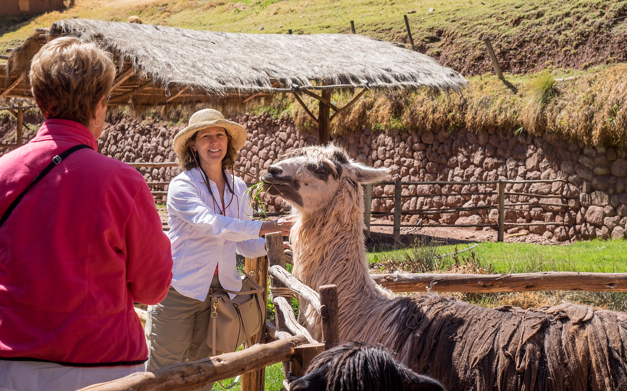 SOnja and llama at the Awanakancha ranch. Cusco, Peru