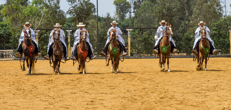 Hacienda Mamacona horse ranch.  Lima, Peru
