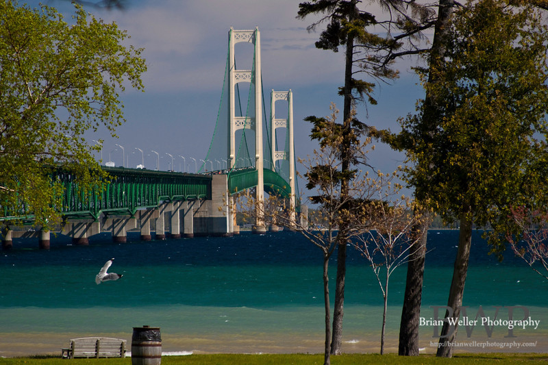 Another daytime shot of the Mackinac Bridge.  I love the natural gradient of the water here.  And the super cooperative seagull of course. :-)
