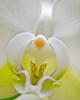 White Orchid 03-2009 V2