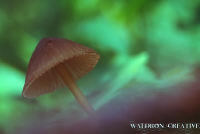 Mushroom, San Juan National Forest, Colorado