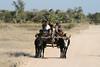 Zebu Cart.  Also known as Public Transportation in Western Madagascar.