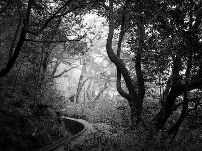 Levada path