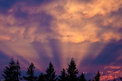 Redland Rays