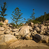 Granite rocks & Hoop pines - Magnetic Island