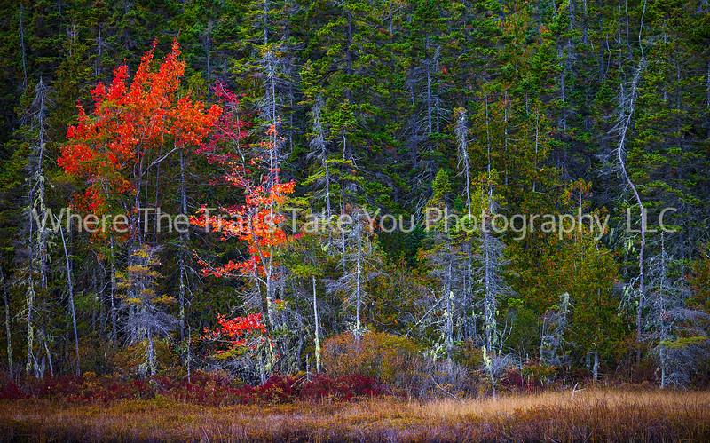 Autumn Scene On A Maine Marsh