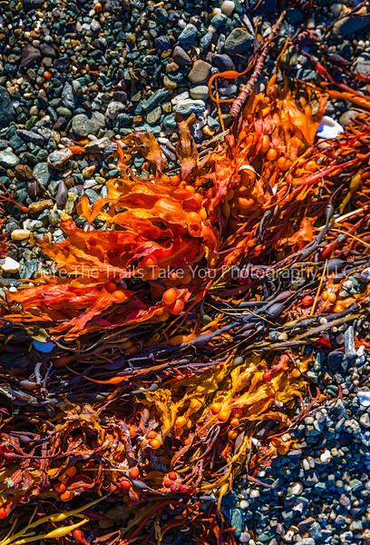 Autumn Seaweed Colors