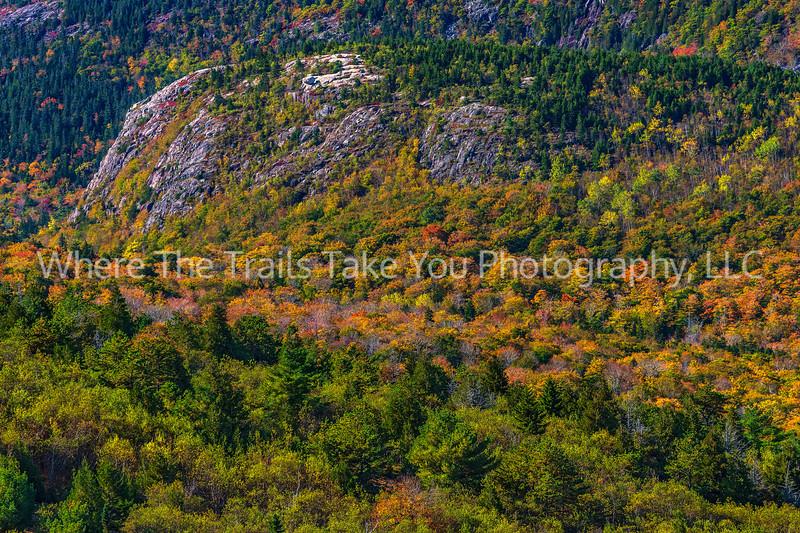 Autumn Color In Acadia