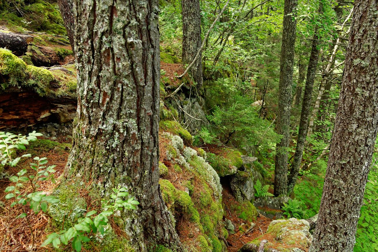 Gulf Hagas Trail, 100 Mile Wilderness