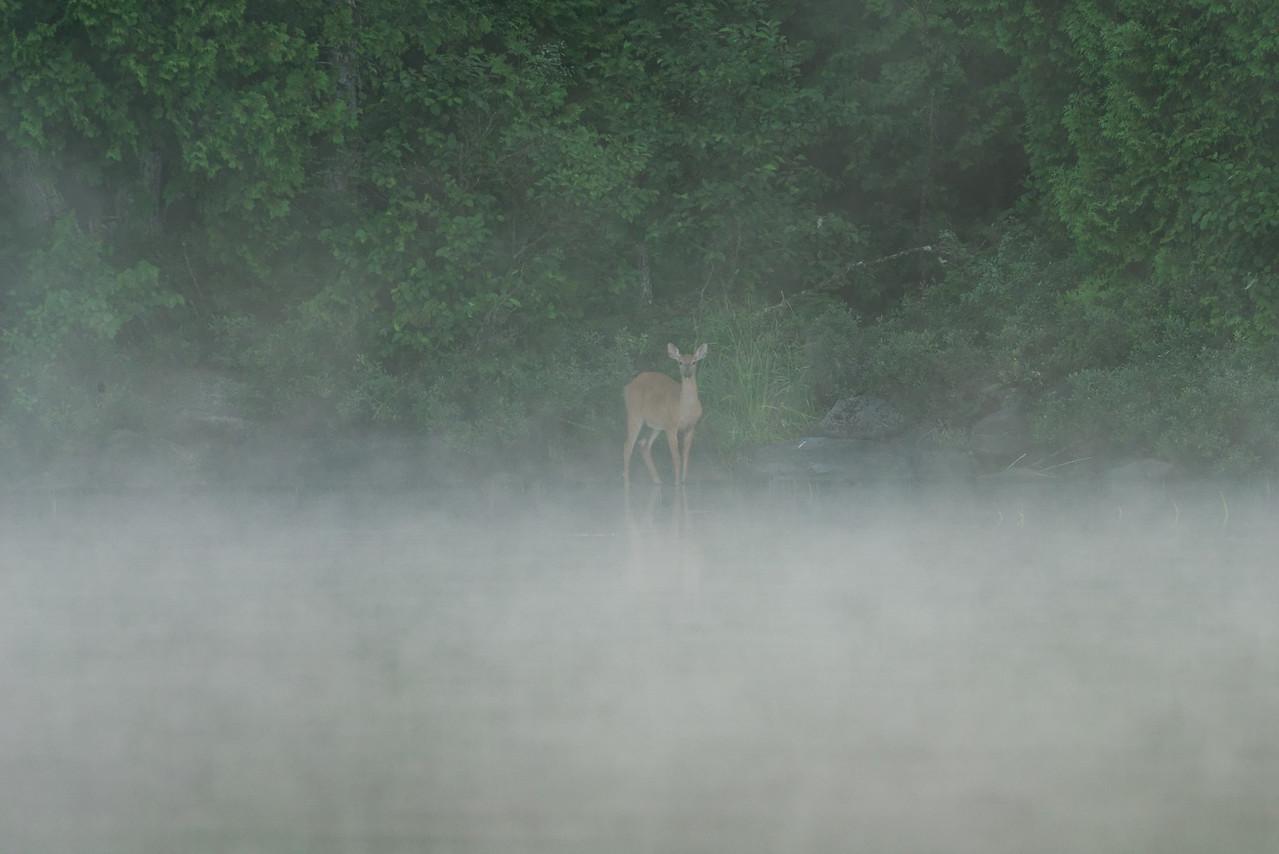 Long Pond, 100 Mile Wilderness