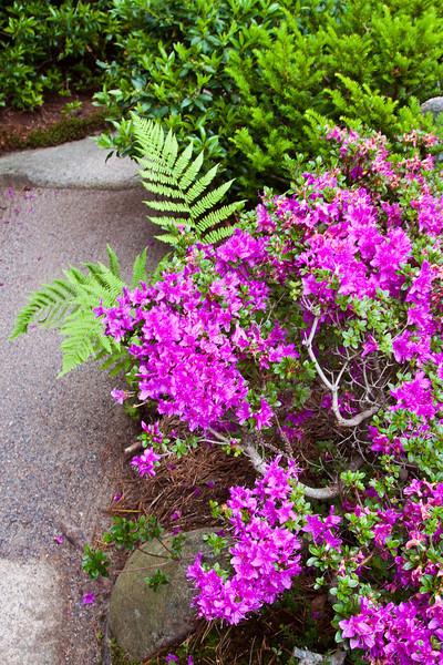 Asticou Azelia Garden, NE Harbor, ME