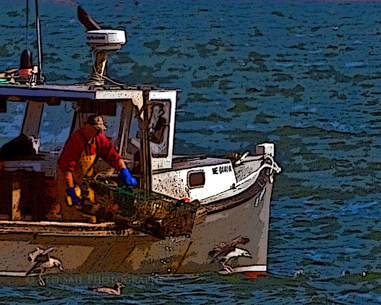 Lobster fisherman bring up his trap.