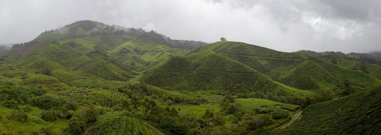 CameronHighlands_20100815_0856_Panorama