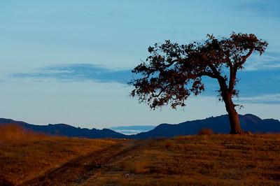 malibu tree at dusk crhall2008_1313