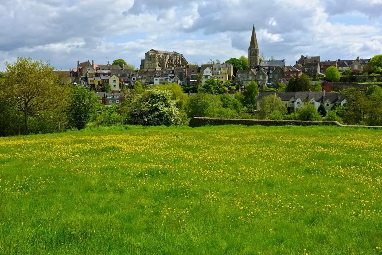 Malmesbury, Wiltshire, buttercups