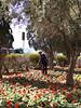 Valletta_2013 04_4496840