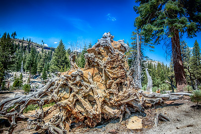 Craggy Tree Stump