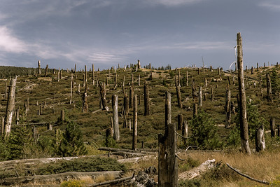 Tree stumps remain, new trees growing in the area burned by the 2010 Rainbow Fire.