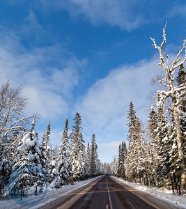 Snow Laden Trees Panoramic