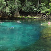 Manatee Springs - Head Pool