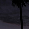 """Crescent Moon and Palm Tree"". 4/15/10"
