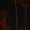 """Crescent Moon,  Venus and Palm Trees"".  4/15/10"