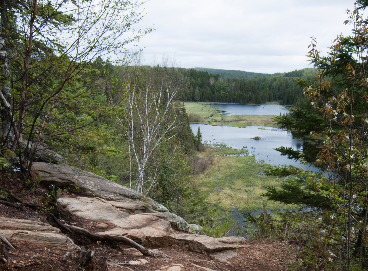 Beaver Pond, Algonquin Park CANADA<br /> <br /> May 2010