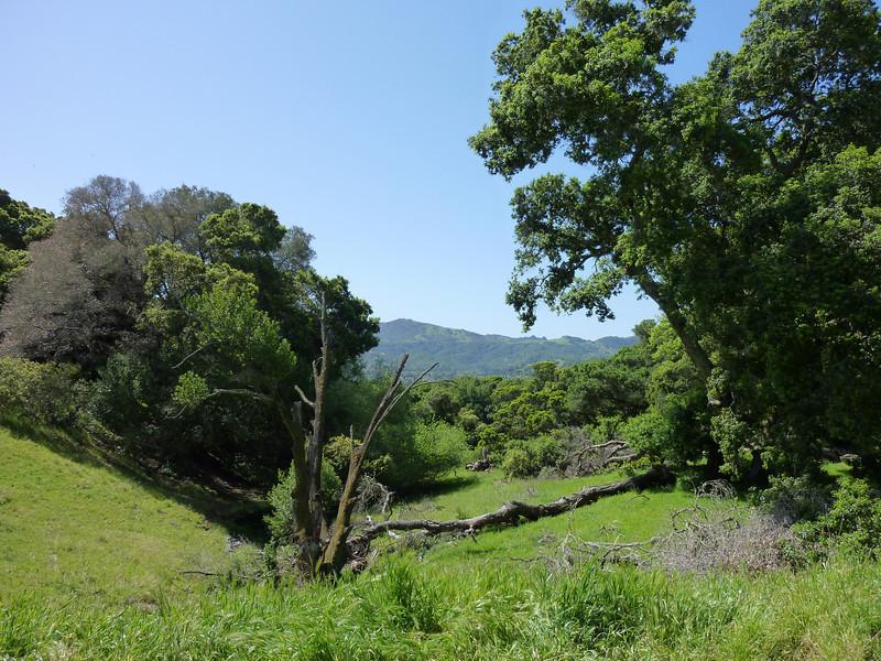 Mt. Burdell Trail