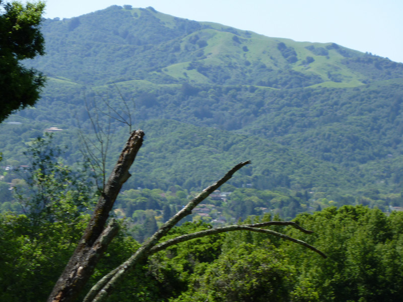 Mt.Burdell Trail
