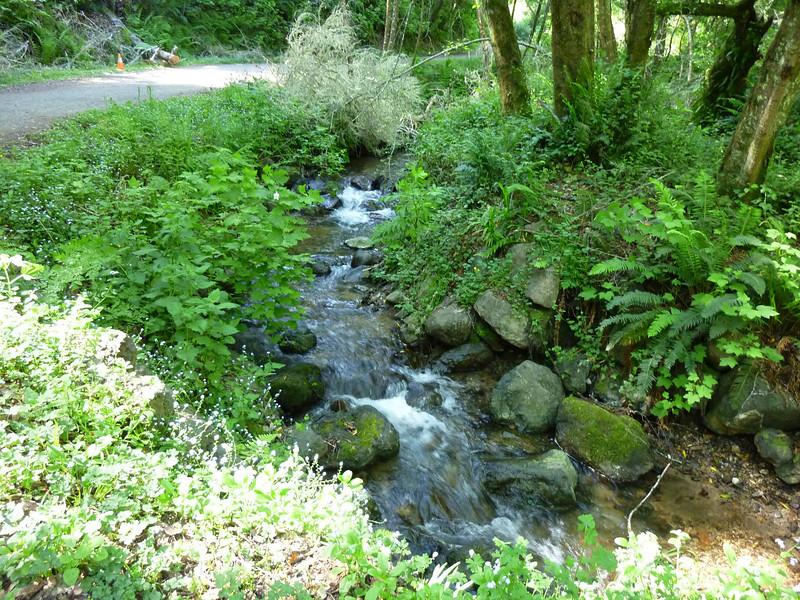 Bear Valley Trail Pt. Reyes