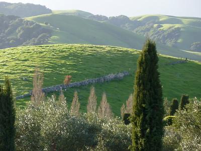 Sonoma HillsFrom Viansa