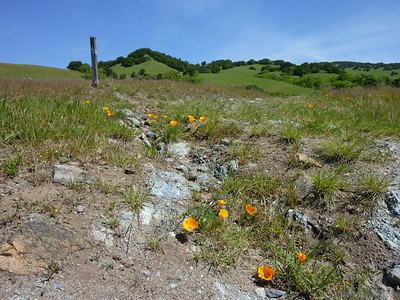 Mt. Burdell Wildflowers