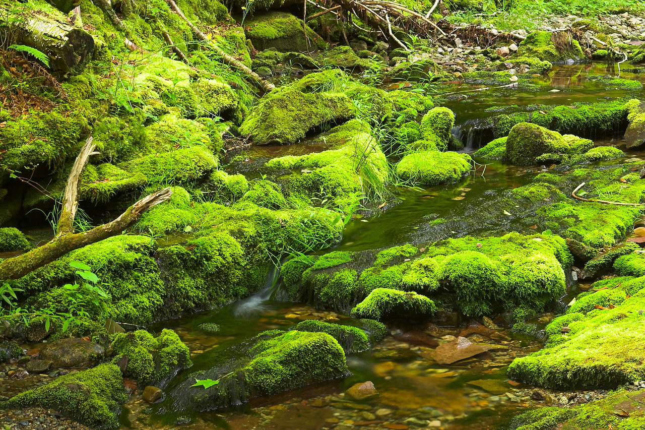 Moss and stream, Fundy National Park, New Brunswick