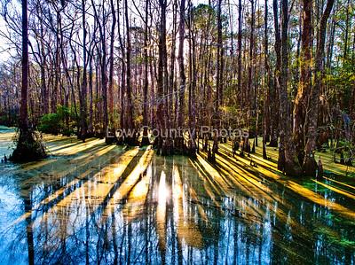 Early Morning Marsh Scene