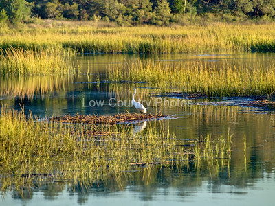 Huntington Beach Marsh Scene
