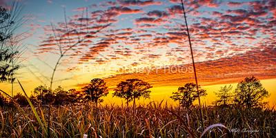 Orange Marsh