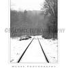 Ellicott City - Pataspco State Park - Black & White 8