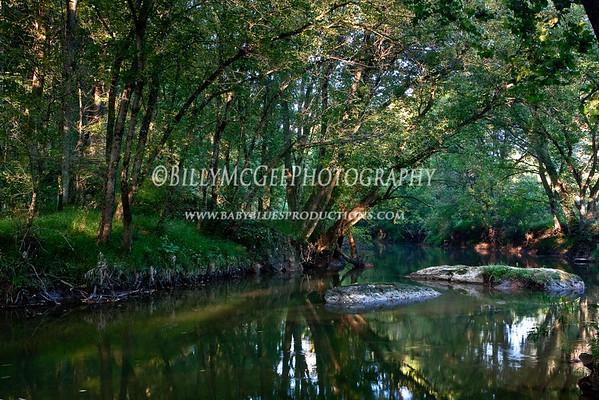 Wooded Stream - 19 Sep 2009