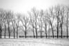 Snowy Treeline