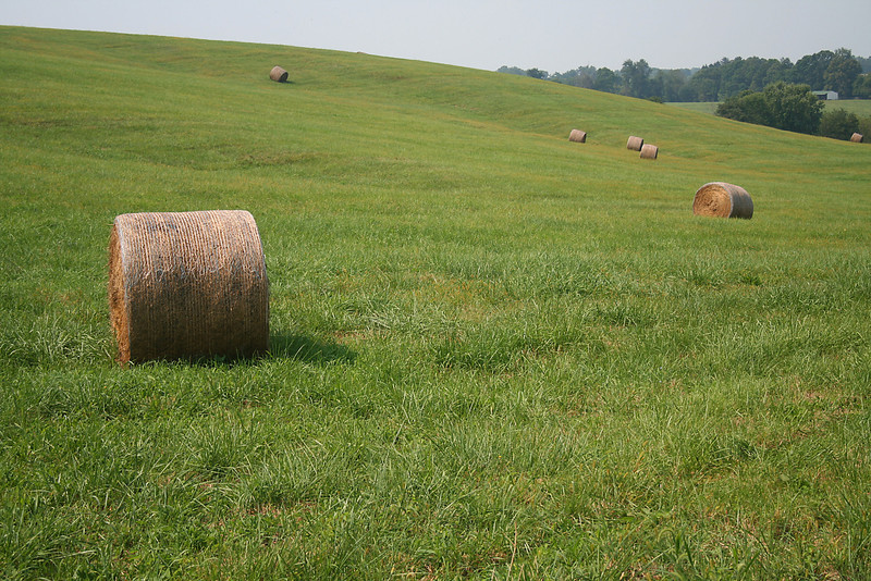 Bails of Hay - Baltimore County