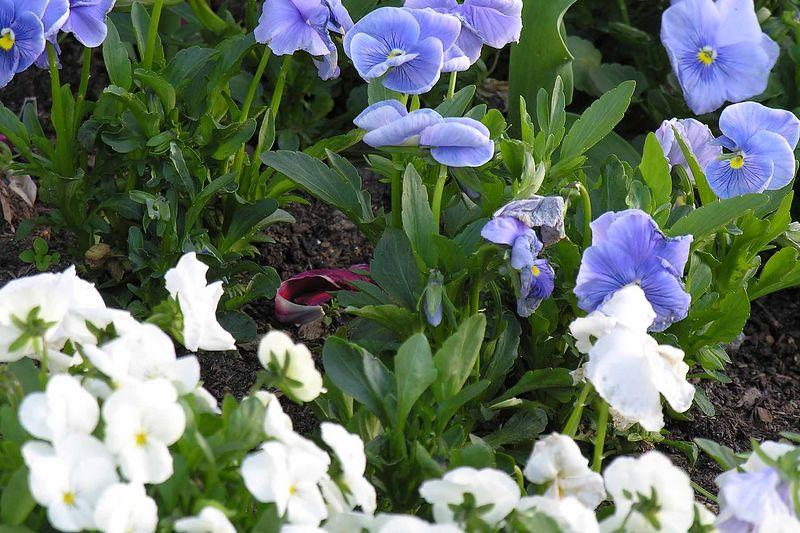 Some neighbor's flowers
