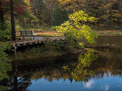 Beaver Pond, Pleasant Valley Audubon, Lenox