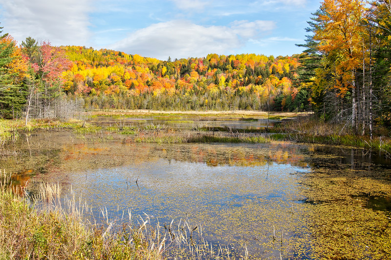 Bog Along Route 201 - Maine