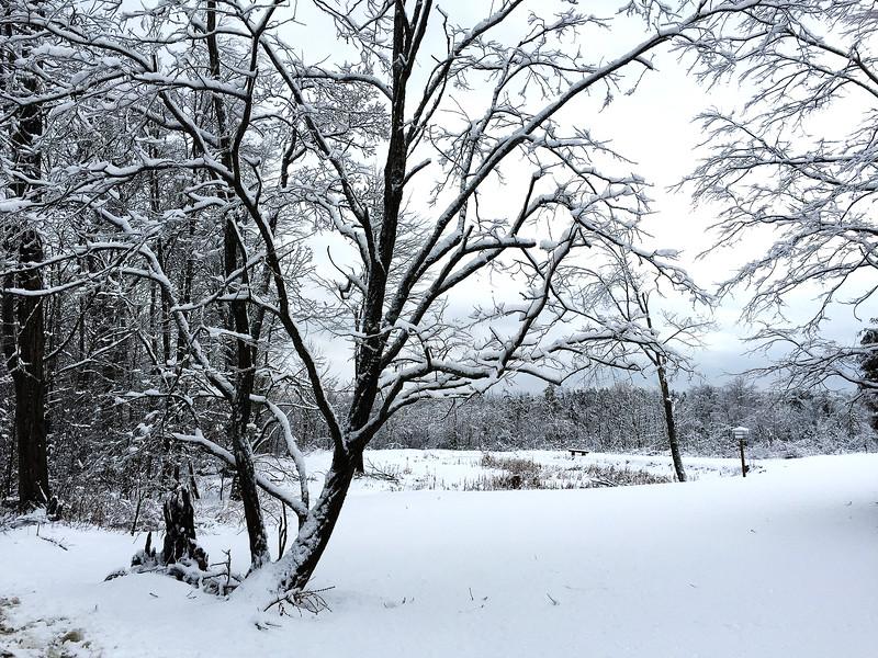 Backyard Tree - East Galway, New York<br /> iPhone Photo
