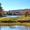 Pair Of Trees - Lewey Lake - The Adirondacks, NY