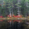 Abol Pond - Baxter State Park - Maine<br /> iPhone photo