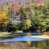 Burst Of Yellow - Lewey Lake - The Adirondacks, NY