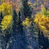 Tree Tops - Upper Buttermilk Falls - Long Lake, NY