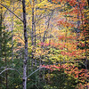 Fall Foliage - Acadia NP - Maine<br /> iPhone photo