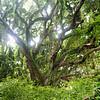 Maui-Honeymoon-Westin-016